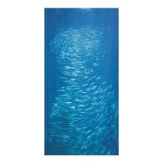 School of Fish Photo Card