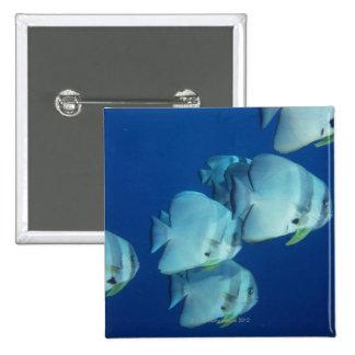 School of Fish Pinback Button