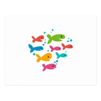 School Of Fish Postcard