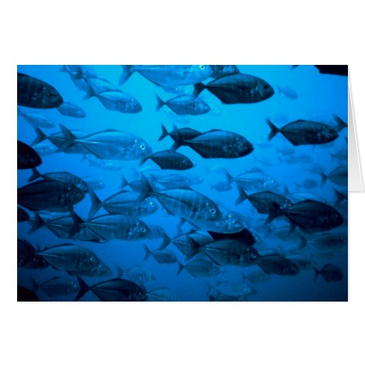 School of Jack Fishes. Greeting Cards