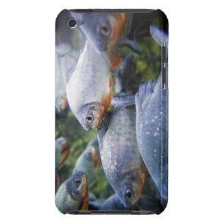 School of Piranhas (Pygocentrus nattereri) iPod Touch Cover