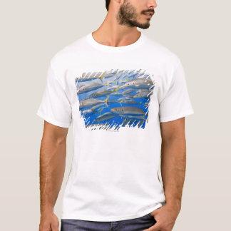 School of Rainbow Runners, Sea of Cortez, Mexico T-Shirt
