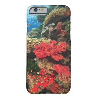 schooling Fairy Basslets  (Pseudanthias 2 Barely There iPhone 6 Case