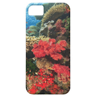 schooling Fairy Basslets  (Pseudanthias 2 Case For The iPhone 5