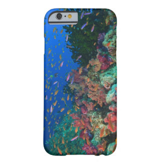 Schooling Fairy Basslets (Pseudanthias Barely There iPhone 6 Case