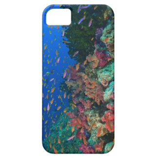 Schooling Fairy Basslets (Pseudanthias iPhone 5 Covers