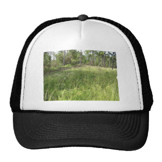 Schwalbea americana habitat trucker hats