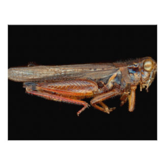 Science - Entomology - The specimin Flyers