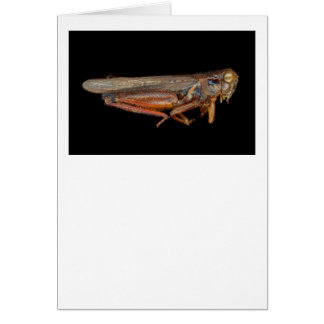 Science - Entomology - The specimin Greeting Card