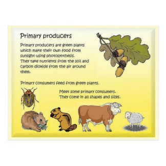 Science, Food sources, Primary producers Postcard
