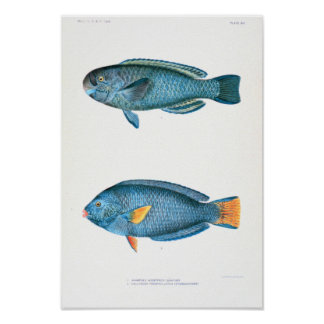 Scientific Fish Studies Poster