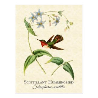 Scintillant Hummingbird Vintage Art Postcard