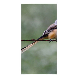 Scissor-tailed Flycatcher perched on barbed wire Personalised Photo Card