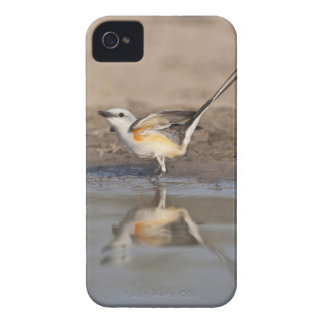 Scissor-tailed Flycatcher reflected in pond iPhone 4 Case-Mate Cases