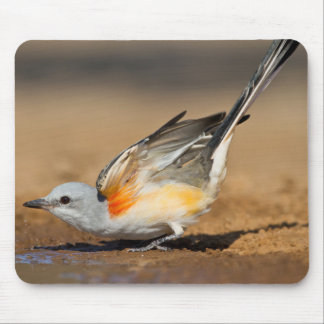 Scissor-Tailed Flycatcher (Tyrannus Forficatus) Mouse Pad