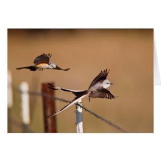 Scissor-Tailed Flycatchers (Tyrannus Forficatus) Card