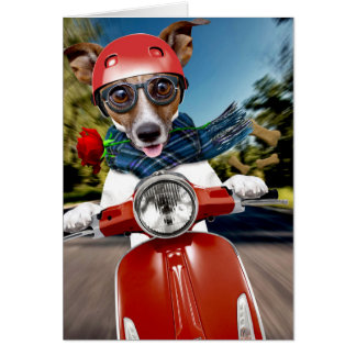 Scooter dog ,jack russell card