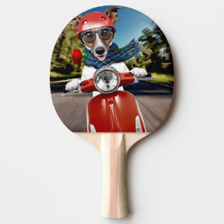 Scooter dog ,jack russell ping pong paddle