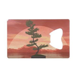 Scotch pine bonsai tree - 3D render