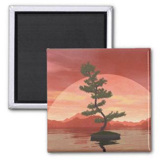 Scotch pine bonsai tree - 3D render Magnet