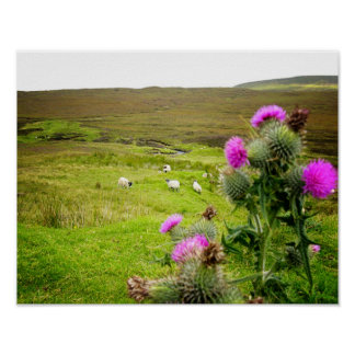 Scotland Highlands Thistle Landscape Poster