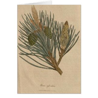Scots Pine Card