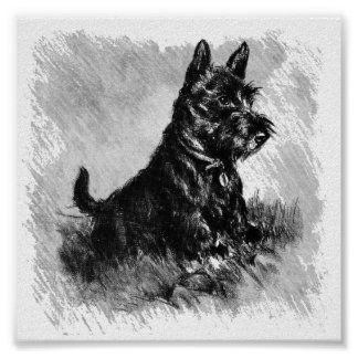 Scottie Puppy Charcoal Style Poster