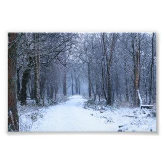 Scottish Bluebell Woods in Winter Photo
