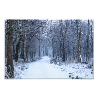 Scottish Bluebell Woods in Winter Photo Print