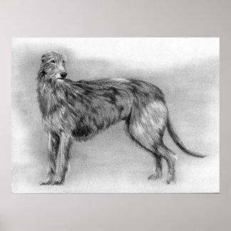 Scottish Deerhound Dog Portrait Poster