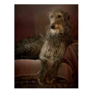 Scottish deerhound one has sofa postcard
