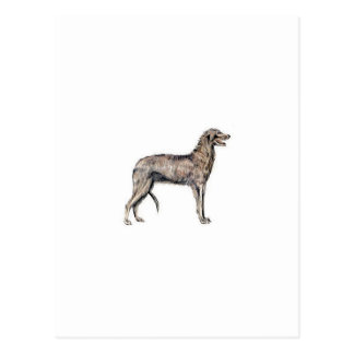 Scottish Deerhound Postcard