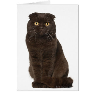 Scottish Fold (18 months old) sitting Card