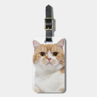 Scottish Fold Cat Luggage Tag