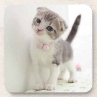 Scottish Fold Kitten Coaster