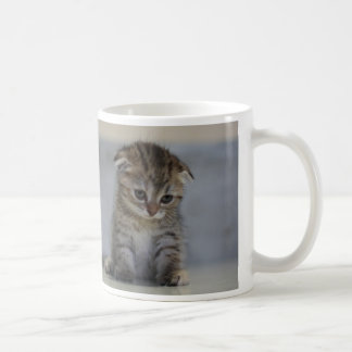 Scottish folding kitten magnetic cup