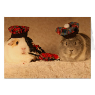 Scottish Guinea Pigs Card