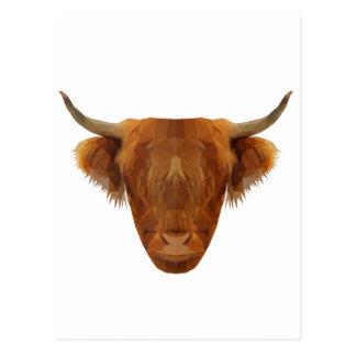 Scottish Highland Cattle Scotland Animal Cow Postcard