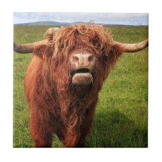 Scottish Highland Cattle - Scotland Ceramic Tile