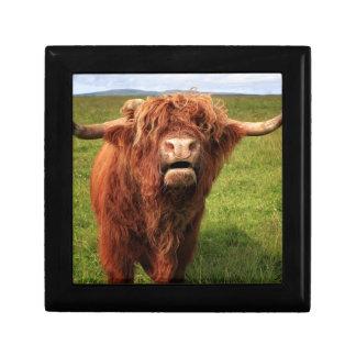 Scottish Highland Cattle - Scotland Gift Box
