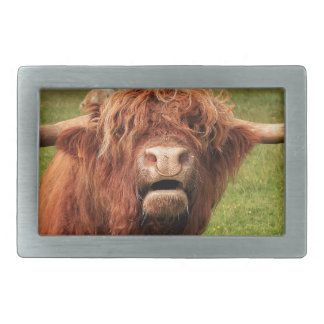 Scottish Highland Cattle - Scotland Rectangular Belt Buckle
