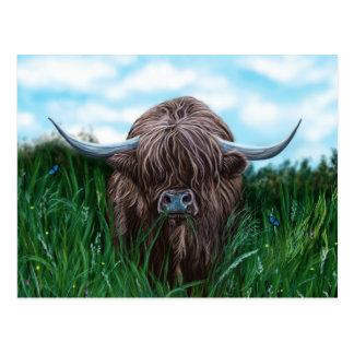 Scottish Highland Cow Painting Postcard