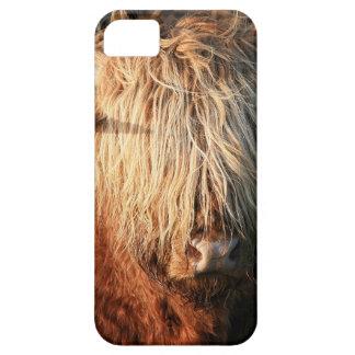 Scottish Highland Cow - Scotland iPhone 5 Cover