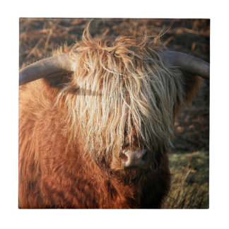 Scottish Highland Cow - Scotland Tile