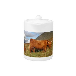 Scottish Highland Cows - Scotland