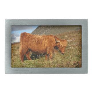 Scottish Highland Cows - Scotland Rectangular Belt Buckles
