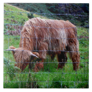 """Scottish Highland Long-Haired Cow"" Large Square Tile"