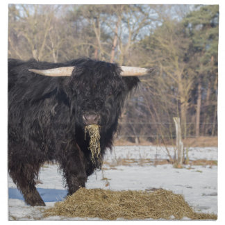 Scottish highlander bull eating hay in winter snow cloth napkins