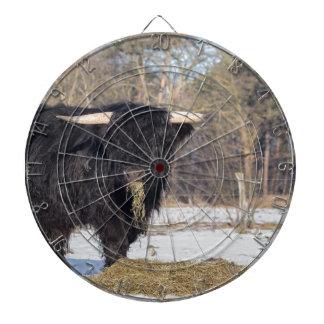 Scottish highlander bull eating hay in winter snow dartboard