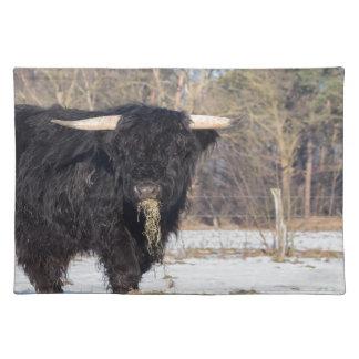Scottish highlander bull eating hay in winter snow place mats